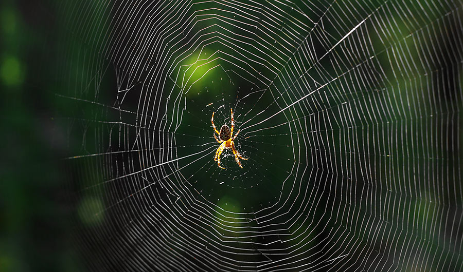 A spider clings to a spider web that takes up the entire frame, with a forest in the background.