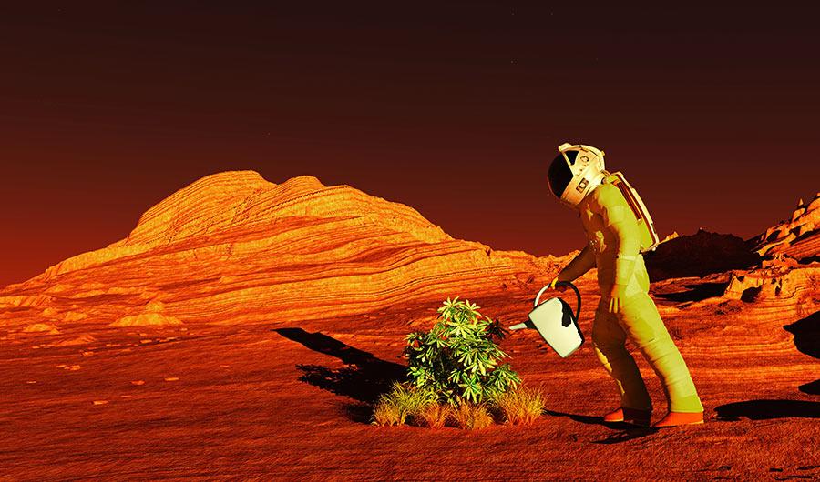 Mars-Plant-Illustration.jpg